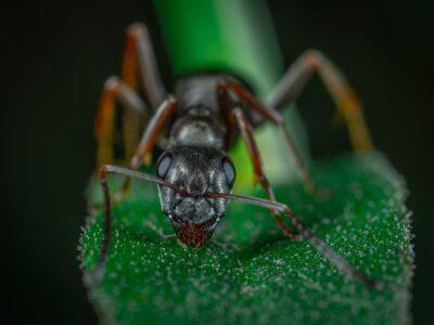 Bestrijden van mieren door melding ongedierte