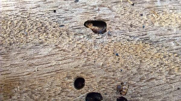 Last Van Houtworm Bel Melding Ongedierte 085-4001020