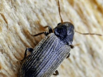 Houtworm Bel Melding Ongedierte