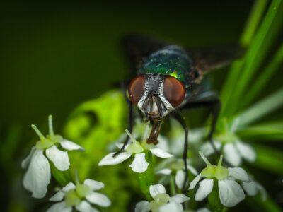 vliegen bestrijding nodig melding ongedierte even bellen